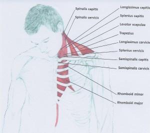 neck stretch 2