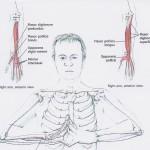 Bl 4 flexors and finger stretch