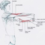 Bl 4 flexors stretch